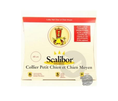 Collier Chien Petit Moy 1 V